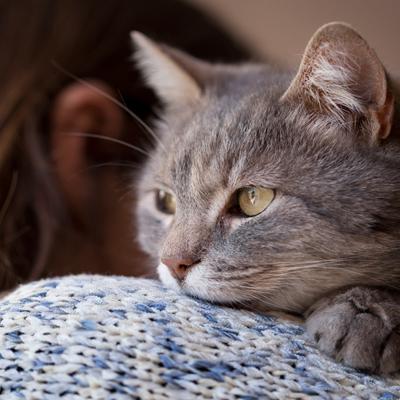 precio incinerar gato