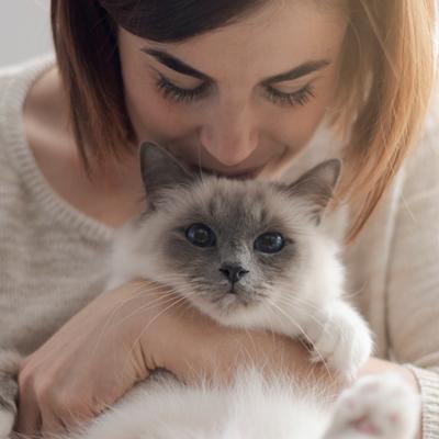 incineración gato precio